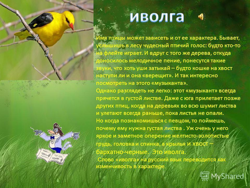 Такое странное название перелетная птица козодой получила еще в давние времена. Есть некая история, которая рассказывает о том, что Козодой с наступлением темного времени суток летит туда, где находятся и пасутся стада. Пернатые туда летят из-за бесч
