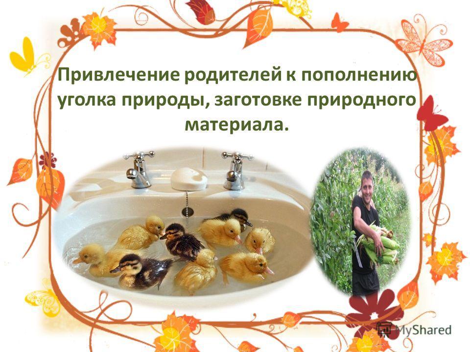 Привлечение родителей к пополнению уголка природы, заготовке природного материала.