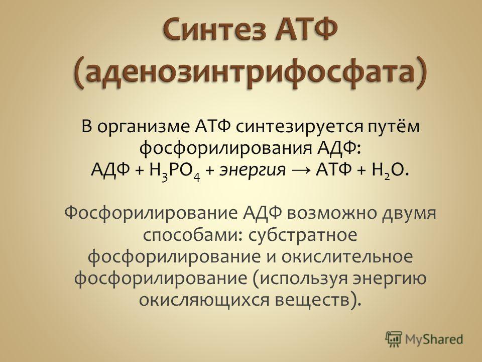 В организме АТФ синтезируется путём фосфорилирования АДФ: АДФ + H 3 PO 4 + энергия АТФ + H 2 O. Фосфорилирование АДФ возможно двумя способами: субстратное фосфорилирование и окислительное фосфорилирование (используя энергию окисляющихся веществ).