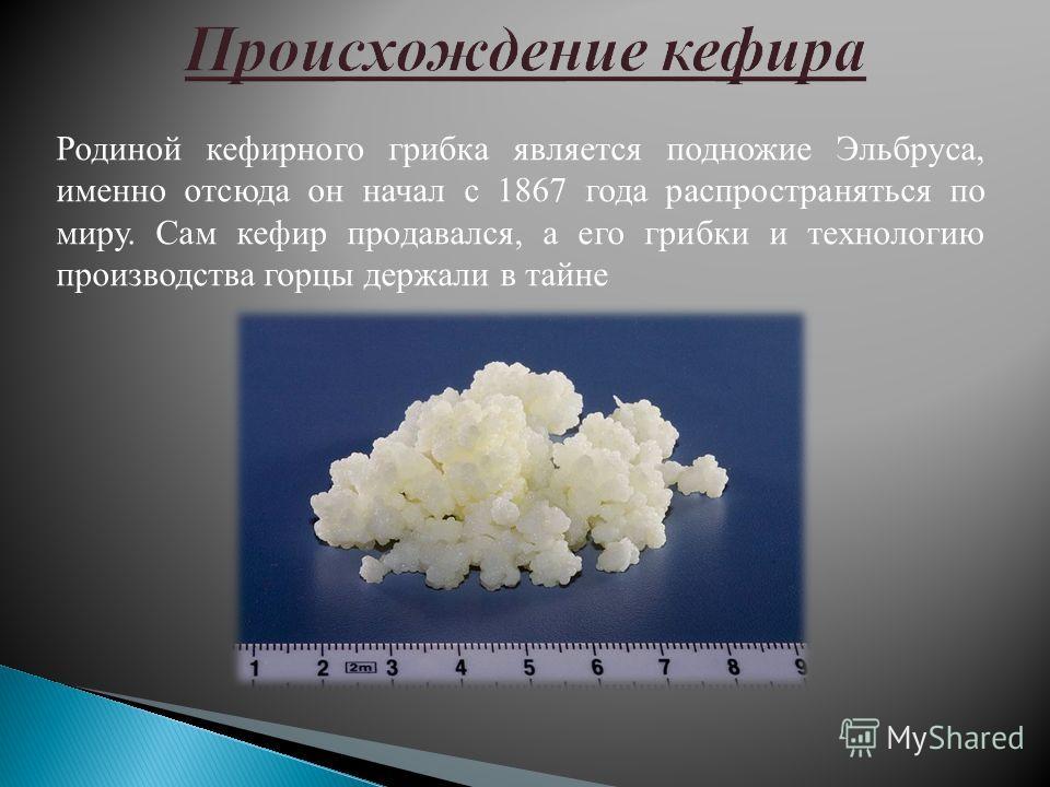 Родиной кефирного грибка является подножие Эльбруса, именно отсюда он начал с 1867 года распространяться по миру. Сам кефир продавался, а его грибки и технологию производства горцы держали в тайне