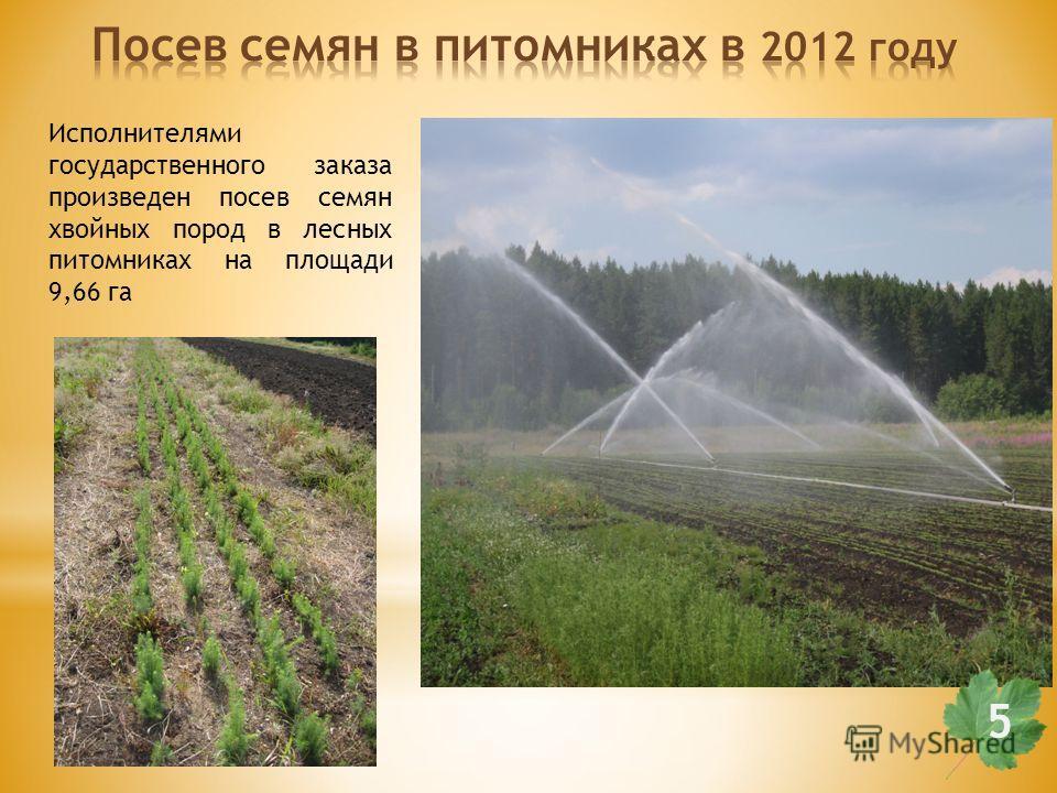 Исполнителями государственного заказа произведен посев семян хвойных пород в лесных питомниках на площади 9,66 га 55