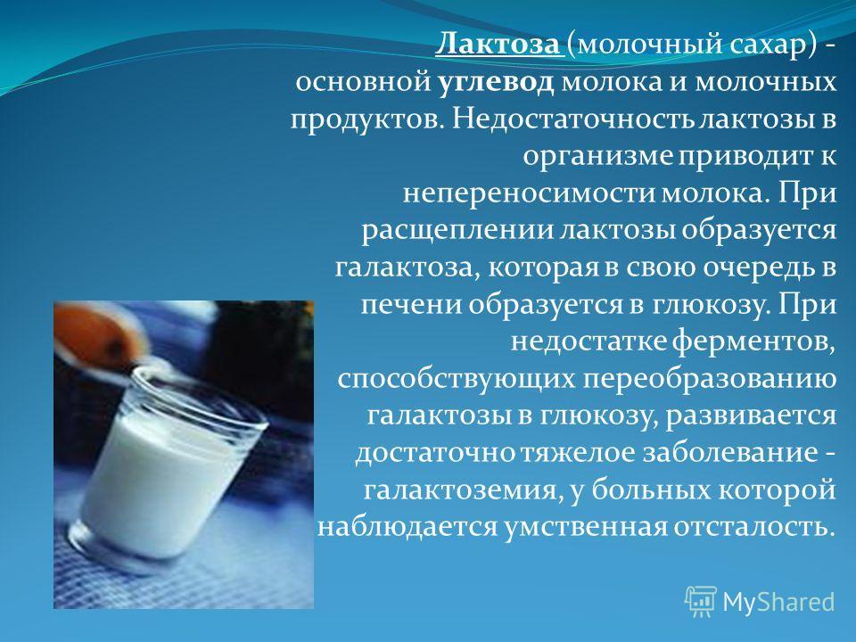 Лактоза (молочный сахар) - основной углевод молока и молочных продуктов. Недостаточность лактозы в организме приводит к непереносимости молока. При расщеплении лактозы образуется галактоза, которая в свою очередь в печени образуется в глюкозу. При не