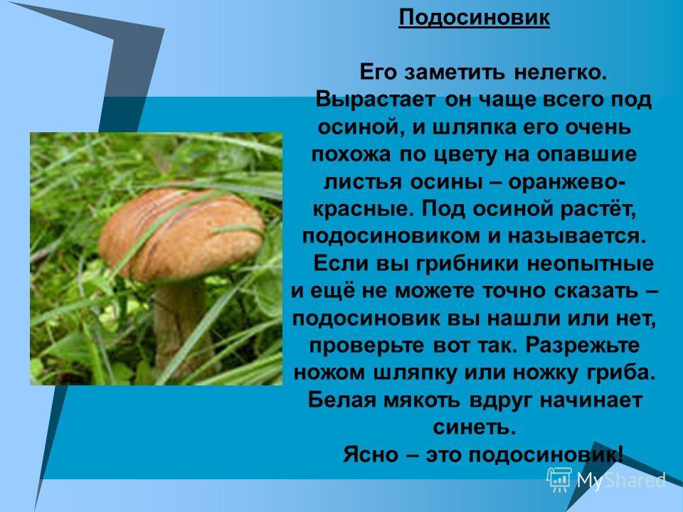 Подосиновик Его заметить нелегко. Вырастает он чаще всего под осиной, и шляпка его очень похожа по цвету на опавшие листья осины – оранжево- красные. Под осиной растёт, подосиновиком и называется. Если вы грибники неопытные и ещё не можете точно сказ