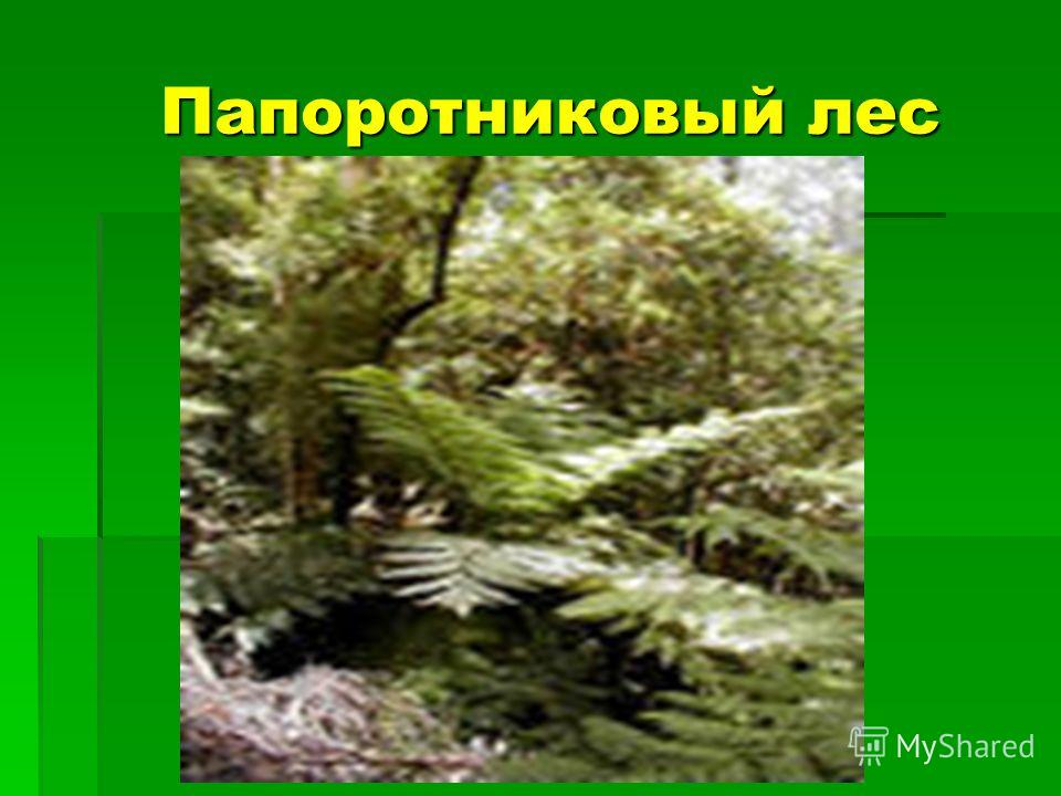Папоротниковый лес Папоротниковый лес