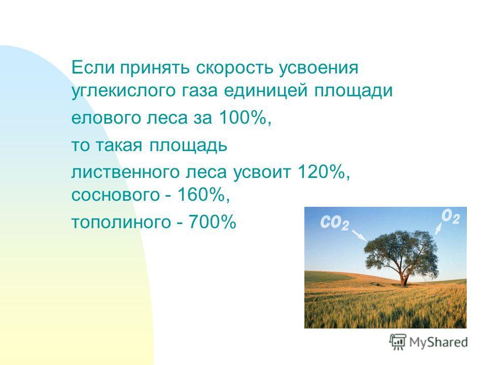 Если принять скорость усвоения углекислого газа единицей площади елового леса за 100%, то такая площадь лиственного леса усвоит 120%, соснового - 160%, тополиного - 700%