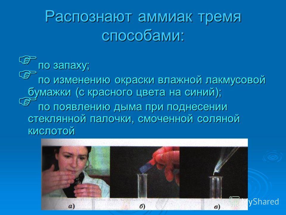 Распознают аммиак тремя способами: по запаху; по запаху; по изменению окраски влажной лакмусовой бумажки (с красного цвета на синий); по изменению окраски влажной лакмусовой бумажки (с красного цвета на синий); по появлению дыма при поднесении стекля