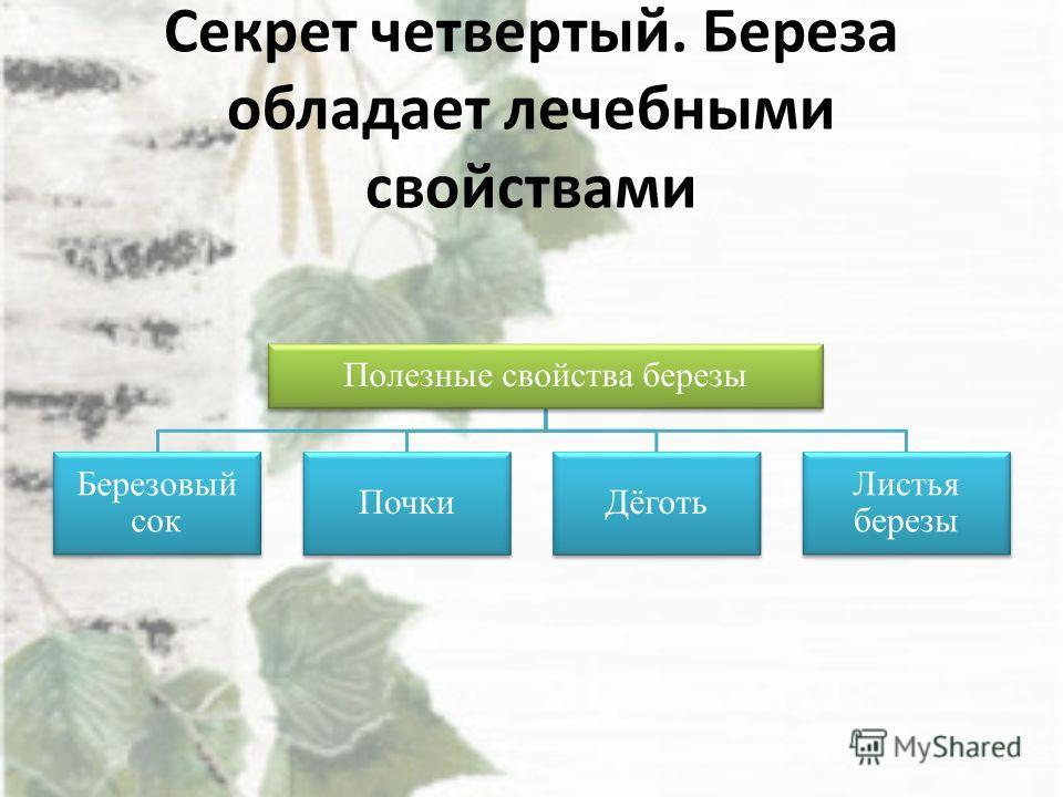 Секрет четвертый. Береза обладает лечебными свойствами Полезные свойства березы Березовый сок ПочкиДёготь Листья березы