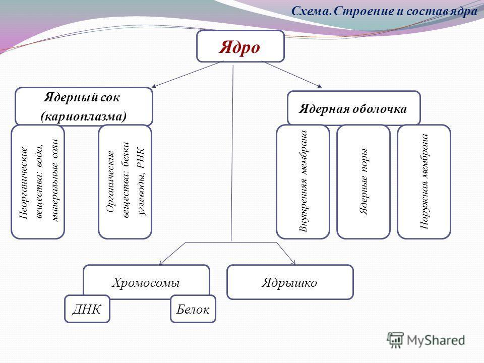 Ядро Ядерный сок (кариоплазма)