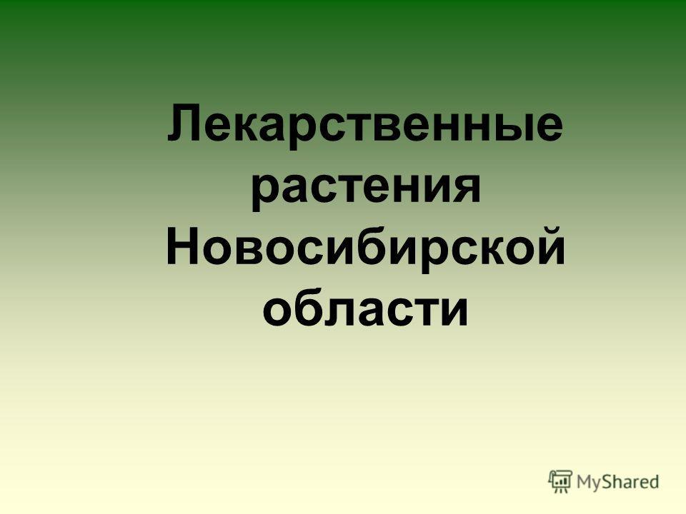 Лекарственные растения Новосибирской области