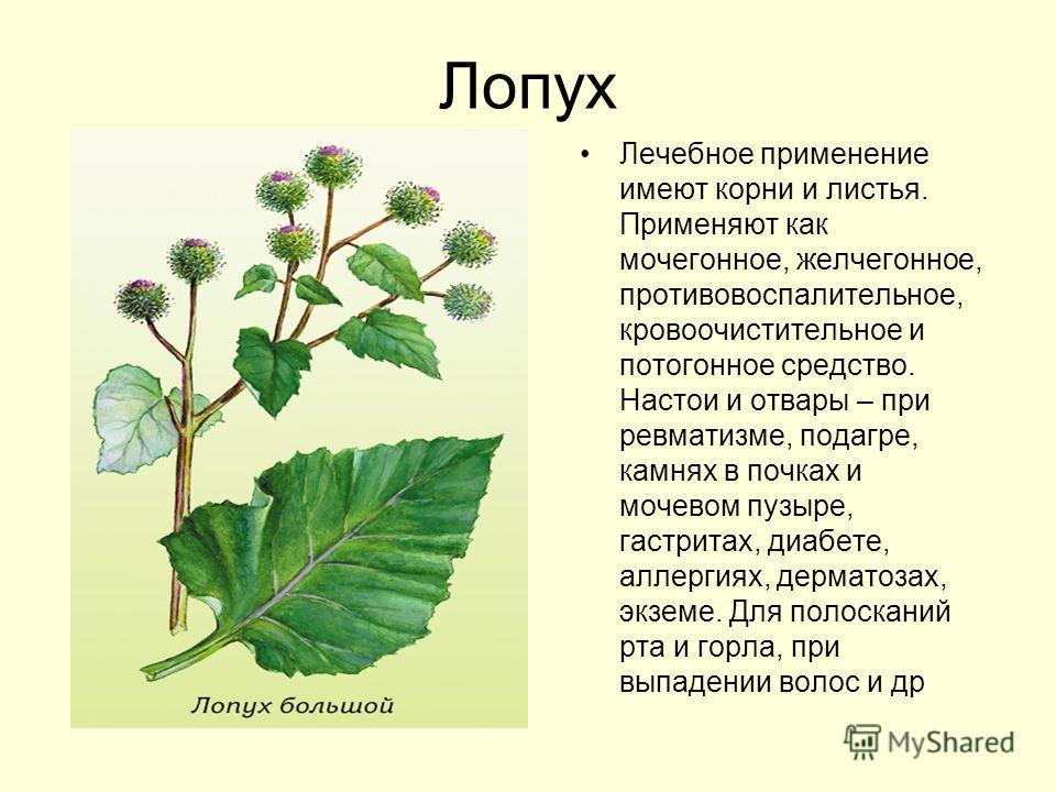 травы против кишечных паразитов
