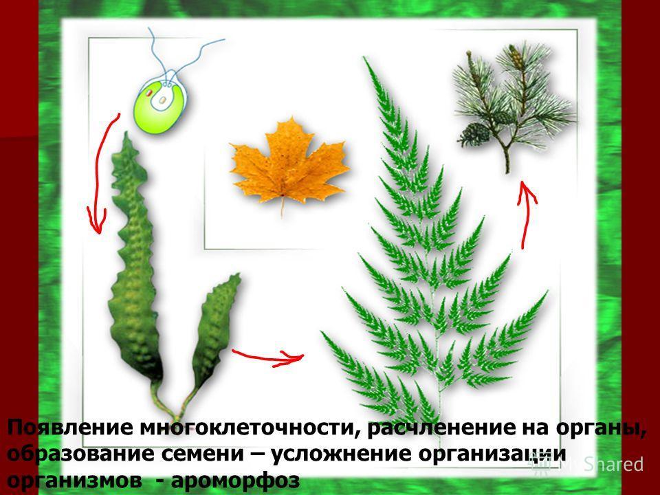 Появление многоклеточности, расчленение на органы, образование семени – усложнение организации организмов - ароморфоз