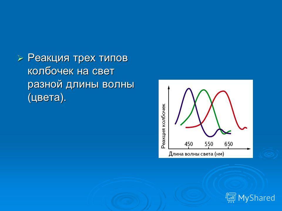 Реакция трех типов колбочек на свет разной длины волны (цвета). Реакция трех типов колбочек на свет разной длины волны (цвета).