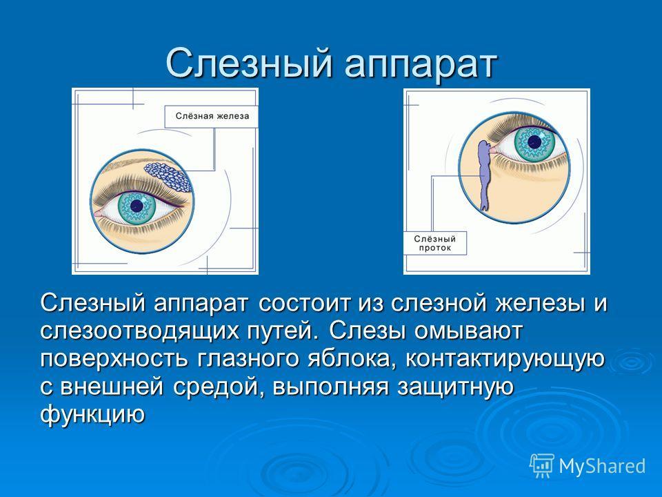 Слезный аппарат Cлезный аппарат состоит из слезной железы и слезоотводящих путей. Слезы омывают поверхность глазного яблока, контактирующую с внешней средой, выполняя защитную функцию