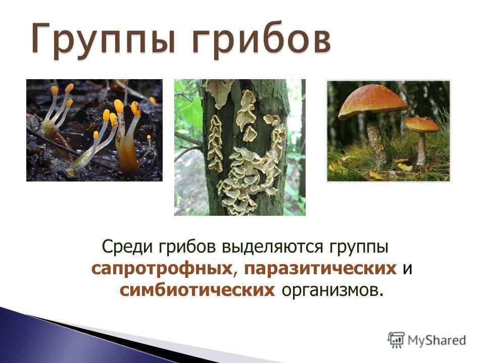 Грибы – это отдельное царство организмов, насчитывающее свыше 100 тысяч видов, различных по образу жизни, строению и внешнему виду. Считается, что всего на Земле полтора миллиона видов грибов. Они выделены в отдельное царство эукариот.