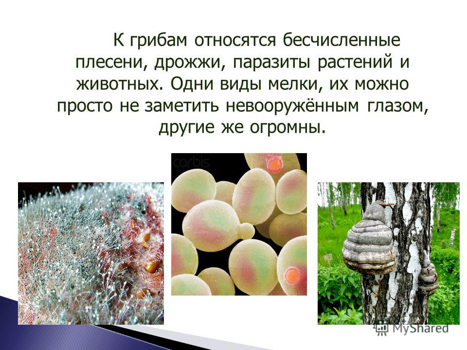 Среди грибов выделяются группы сапротрофных, паразитических и симбиотических организмов.