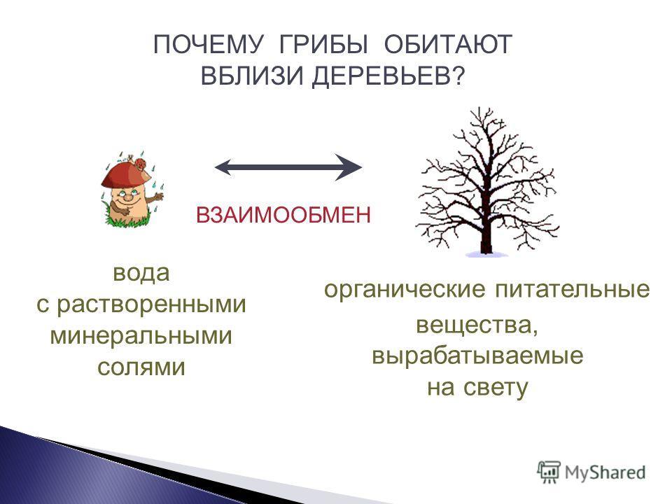 Грибы относятся к гетеротрофным организмам, так как питаются готовыми органическими веществами.