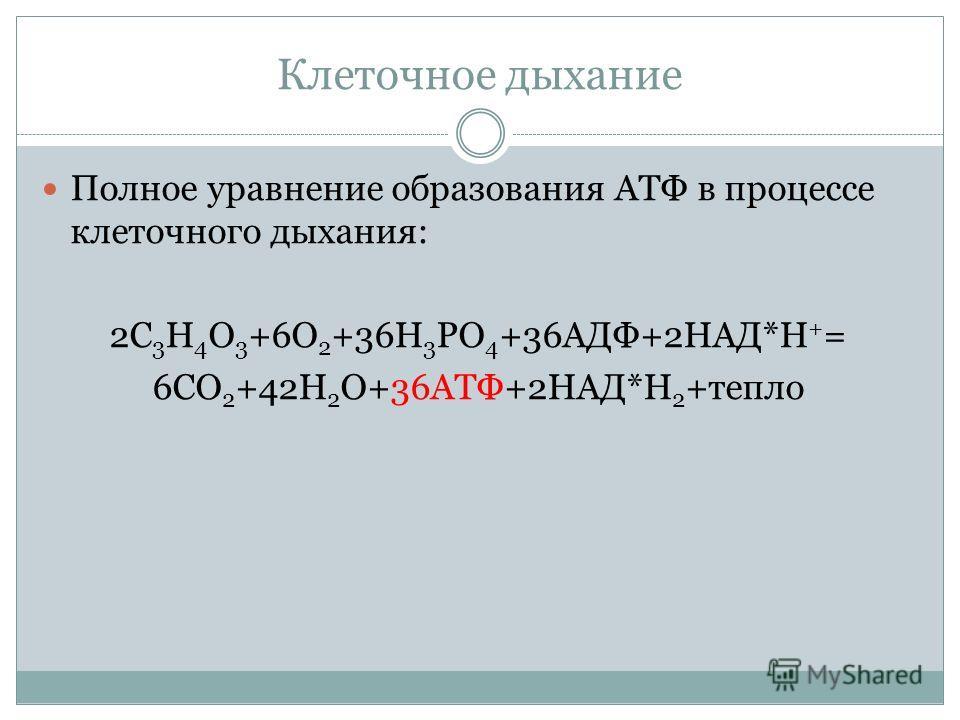 Клеточное дыхание Полное уравнение образования АТФ в процессе клеточного дыхания: 2С 3 Н 4 О 3 +6О 2 +36Н 3 РО 4 +36АДФ+2НАД*Н + = 6СО 2 +42Н 2 О+36АТФ+2НАД*Н 2 +тепло