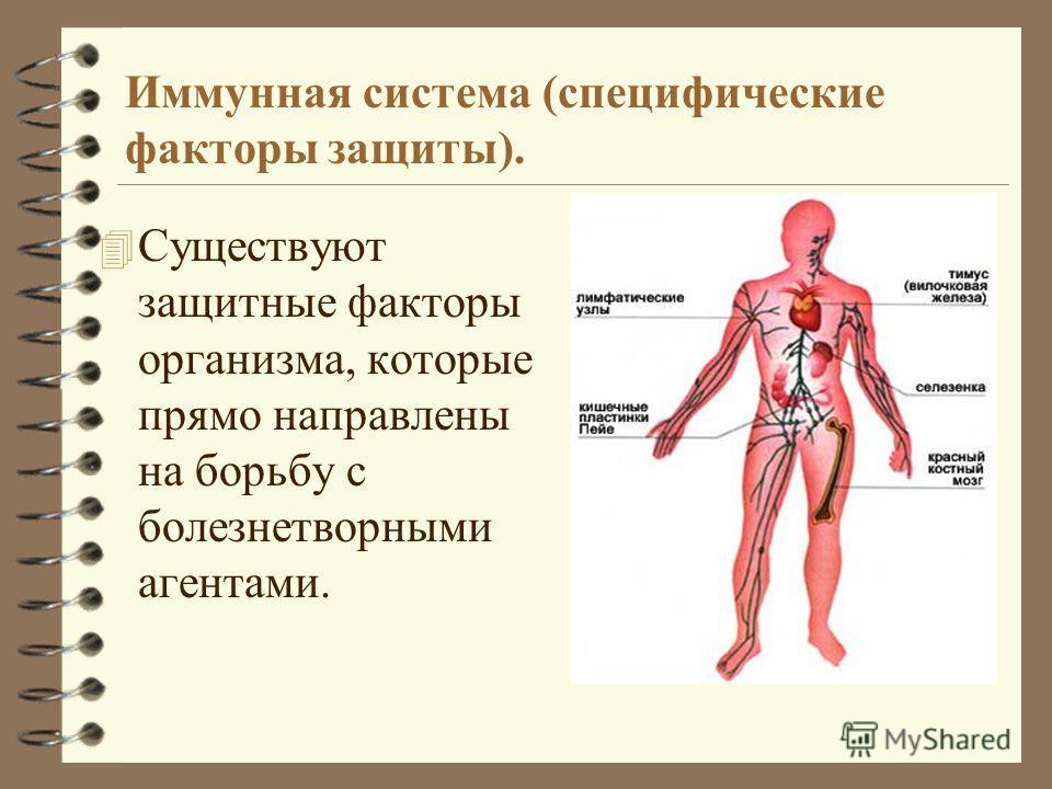 Иммунная система (специфические факторы защиты). 4 Существуют защитные факторы организма, которые прямо направлены на борьбу с болезнетворными агентами.