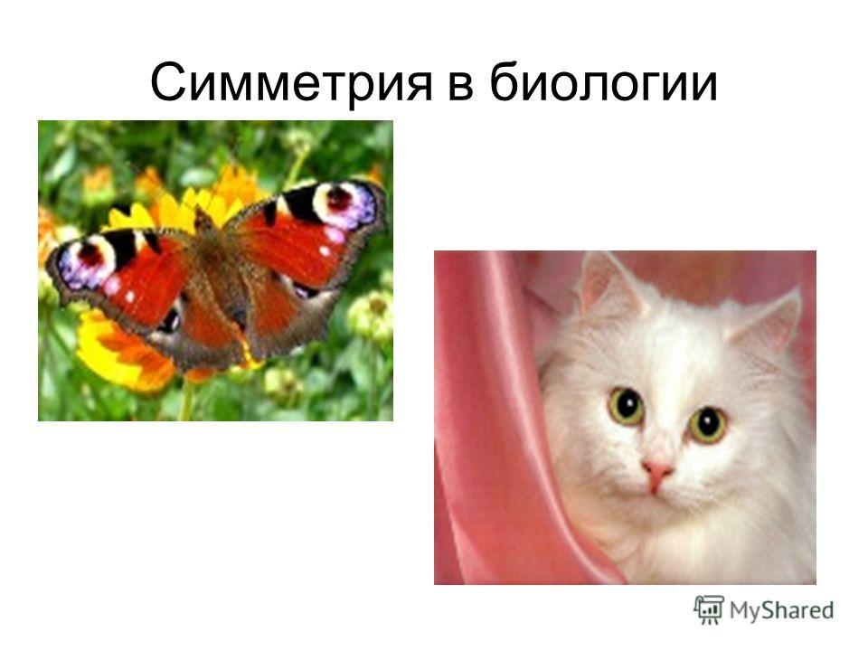 Симметрия в биологии