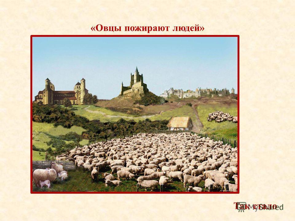 «Овцы пожирают людей» Так стало