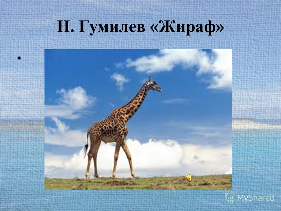 Н. Гумилев «Жираф»