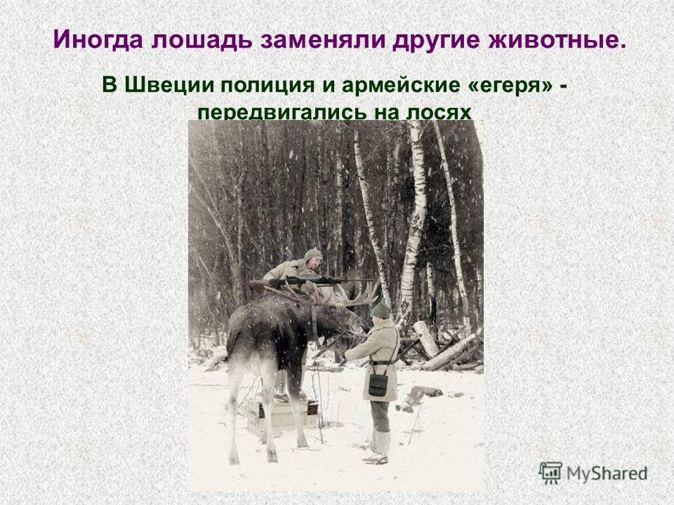Иногда лошадь заменяли другие животные. В Швеции полиция и армейские «егеря» - передвигались на лосях