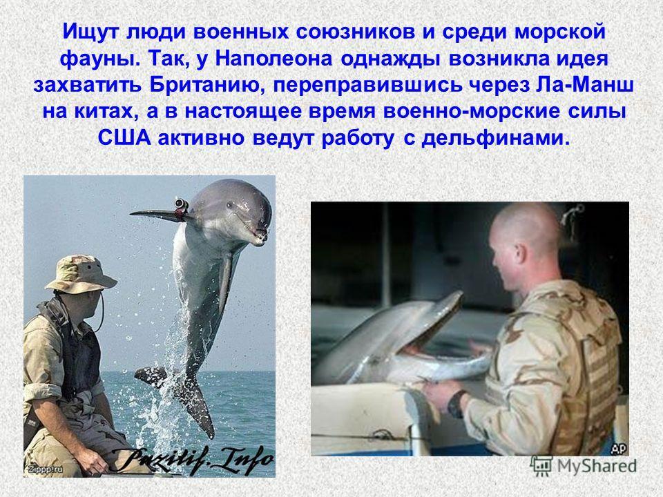 Ищут люди военных союзников и среди морской фауны. Так, у Наполеона однажды возникла идея захватить Британию, переправившись через Ла-Манш на китах, а в настоящее время военно-морские силы США активно ведут работу с дельфинами.