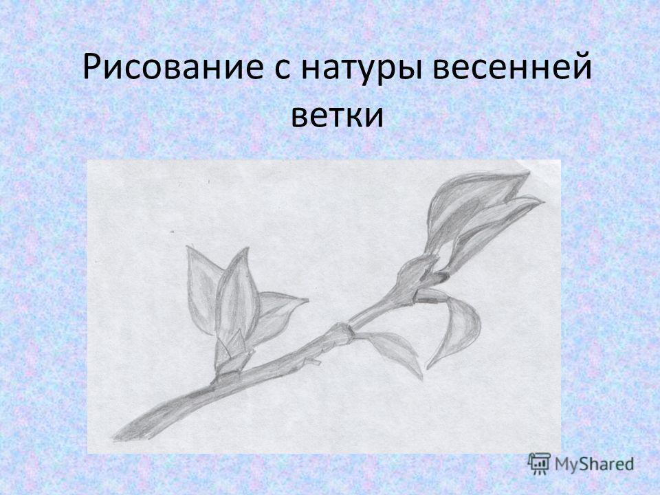 Рисование с натуры весенней ветки