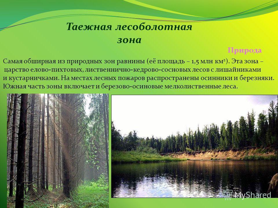Таежная лесоболотная зона Самая обширная из природных зон равнины (её площадь – 1,5 млн км 2 ). Эта зона – царство елово-пихтовых, лиственнично-кедрово-сосновых лесов с лишайниками и кустарничками. На местах лесных пожаров распространены осинники и б