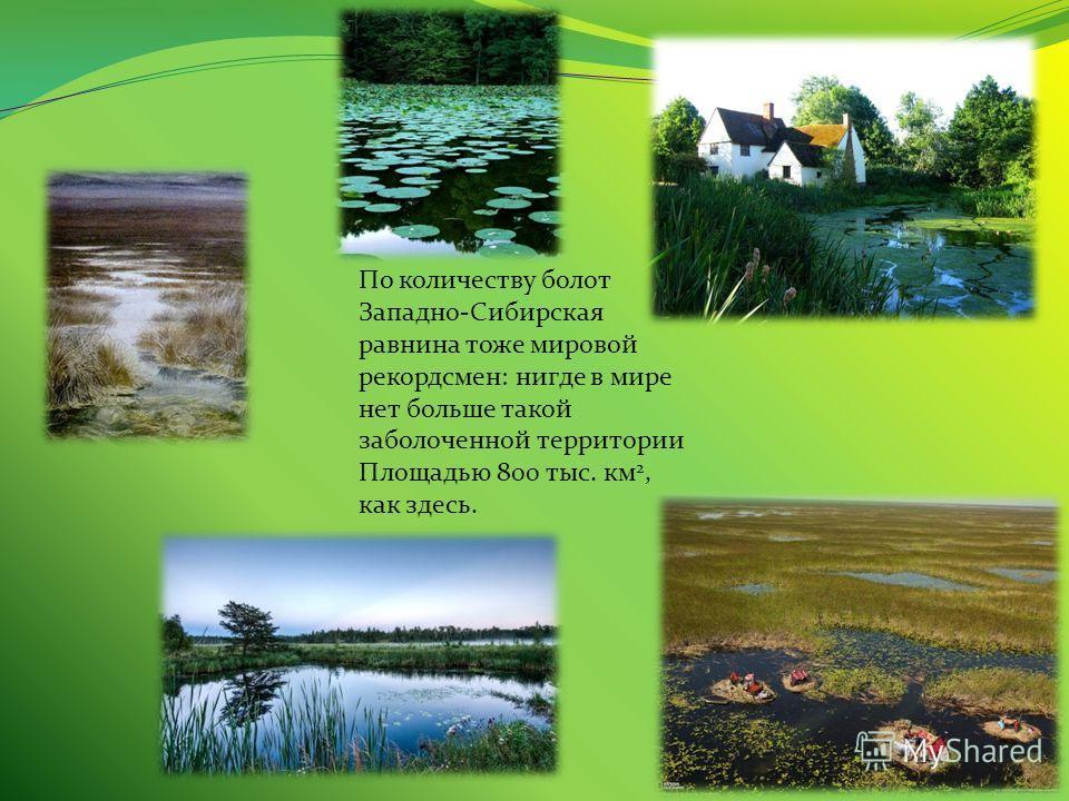 По количеству болот Западно-Сибирская равнина тоже мировой рекордсмен: нигде в мире нет больше такой заболоченной территории Площадью 800 тыс. км 2, как здесь.