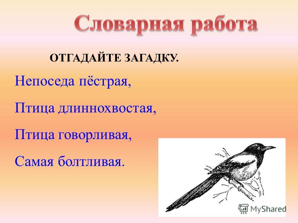 ОТГАДАЙТЕ ЗАГАДКУ. Непоседа пёстрая, Птица длиннохвостая, Птица говорливая, Самая болтливая.