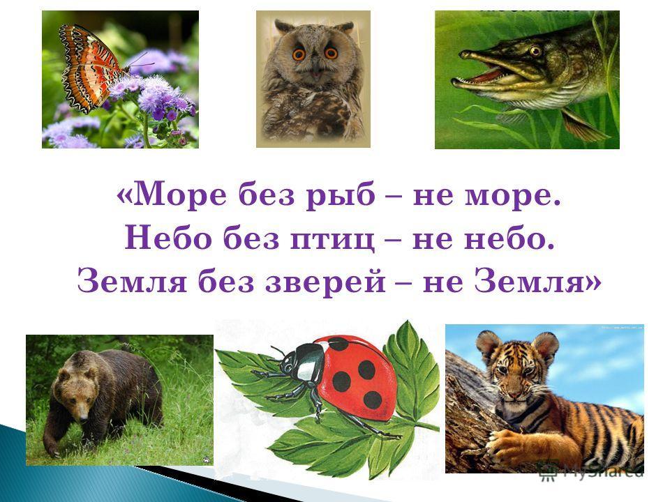 «Море без рыб – не море. Небо без птиц – не небо. Земля без зверей – не Земля»