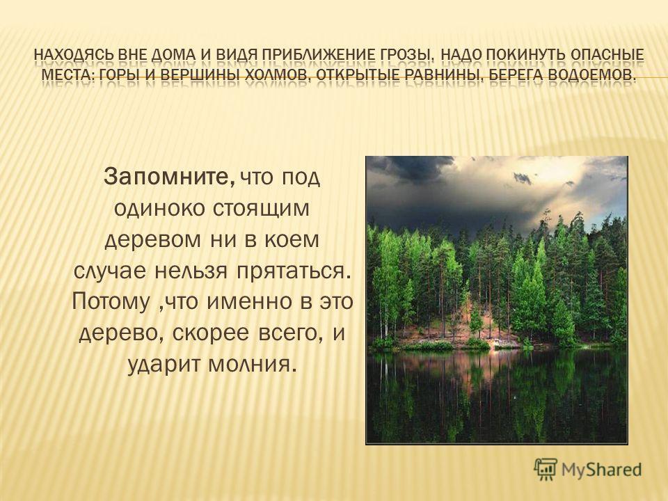 Запомните, что под одиноко стоящим деревом ни в коем случае нельзя прятаться. Потому,что именно в это дерево, скорее всего, и ударит молния.