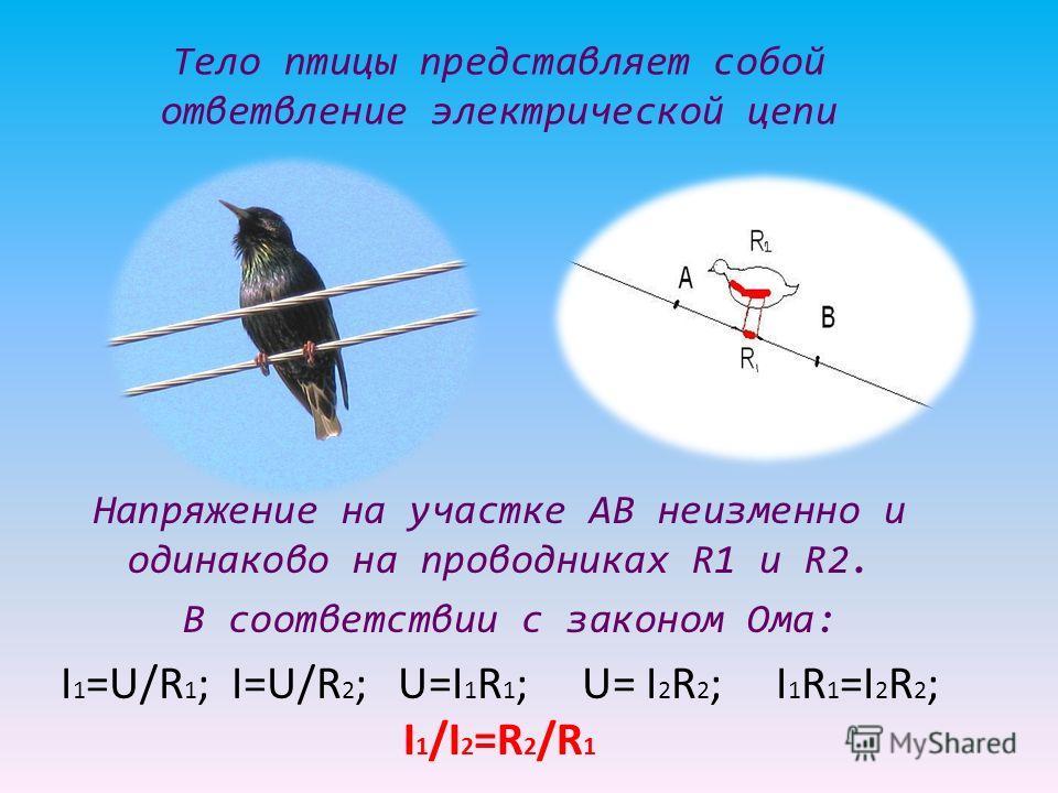 Тело птицы представляет собой ответвление электрической цепи Напряжение на участке АВ неизменно и одинаково на проводниках R1 и R2. В соответствии с законом Ома: I 1 =U/R 1 ; I=U/R 2 ; U=I 1 R 1 ; U= I 2 R 2 ; I 1 R 1 =I 2 R 2 ; I 1 /I 2 =R 2 /R 1