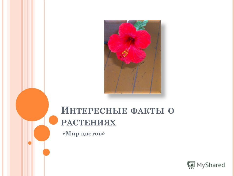 И НТЕРЕСНЫЕ ФАКТЫ О РАСТЕНИЯХ «Мир цветов»