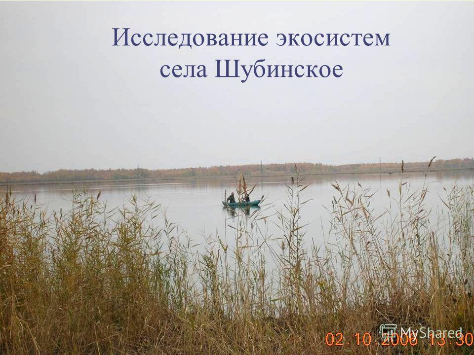 Исследование экосистем села Шубинское