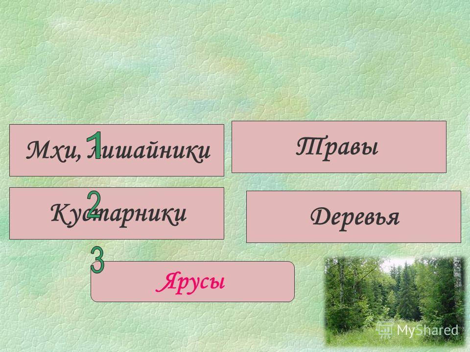 Кустарники Травы Деревья Ярусы Мхи, лишайники
