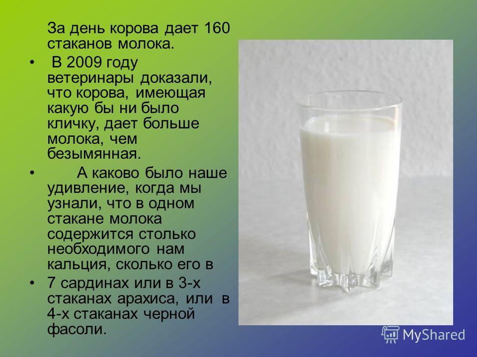 За день корова дает 160 стаканов молока. В 2009 году ветеринары доказали, что корова, имеющая какую бы ни было кличку, дает больше молока, чем безымянная. А каково было наше удивление, когда мы узнали, что в одном стакане молока содержится столько не