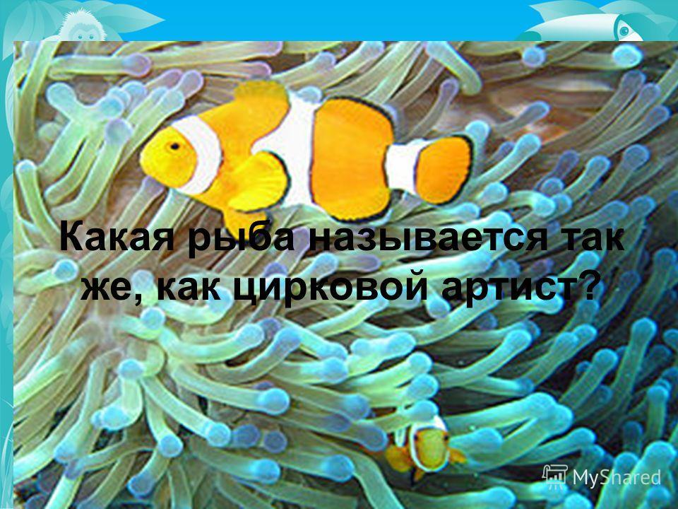 Какая рыба называется так же, как цирковой артист?