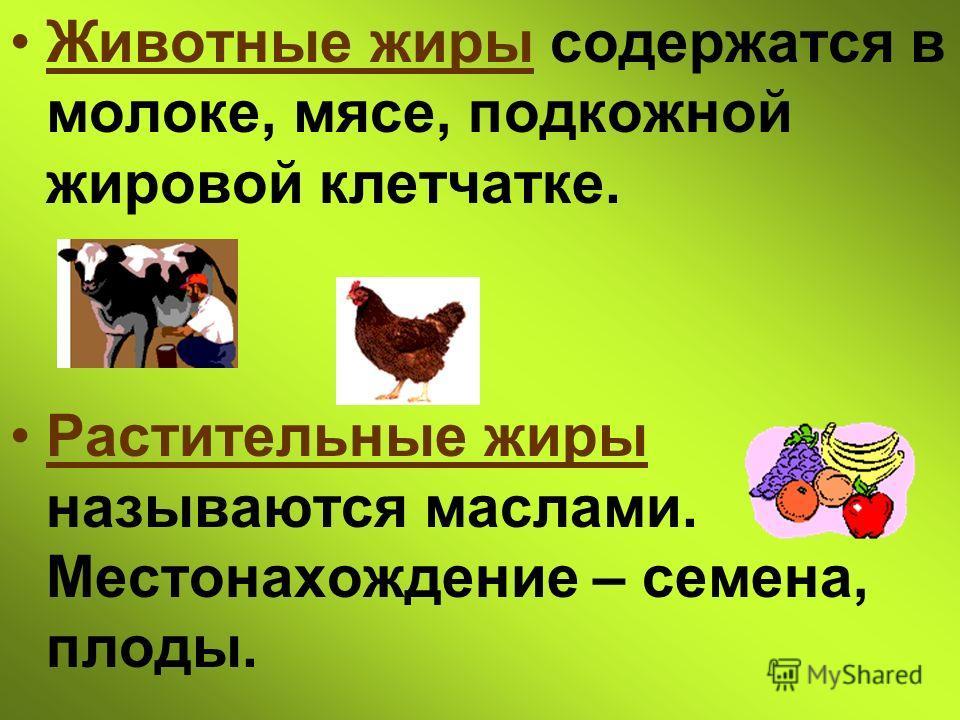 Животные жиры содержатся в молоке, мясе, подкожной жировой клетчатке. Растительные жиры называются маслами. Местонахождение – семена, плоды.