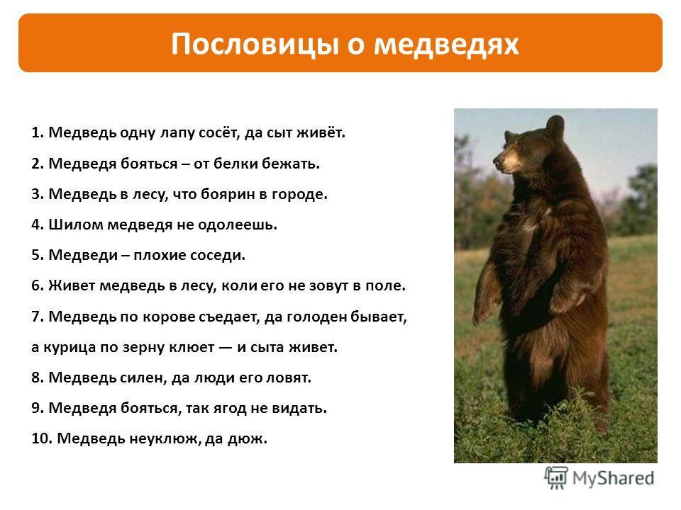 1. Медведь одну лапу сосёт, да сыт живёт. 2. Медведя бояться – от белки бежать. 3. Медведь в лесу, что боярин в городе. 4. Шилом медведя не одолеешь. 5. Медведи – плохие соседи. 6. Живет медведь в лесу, коли его не зовут в поле. 7. Медведь по корове