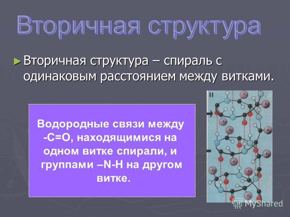 Вторичная структура – спираль с одинаковым расстоянием между витками. Вторичная структура – спираль с одинаковым расстоянием между витками. Водородные связи между -С=О, находящимися на одном витке спирали, и группами –N-H на другом витке.