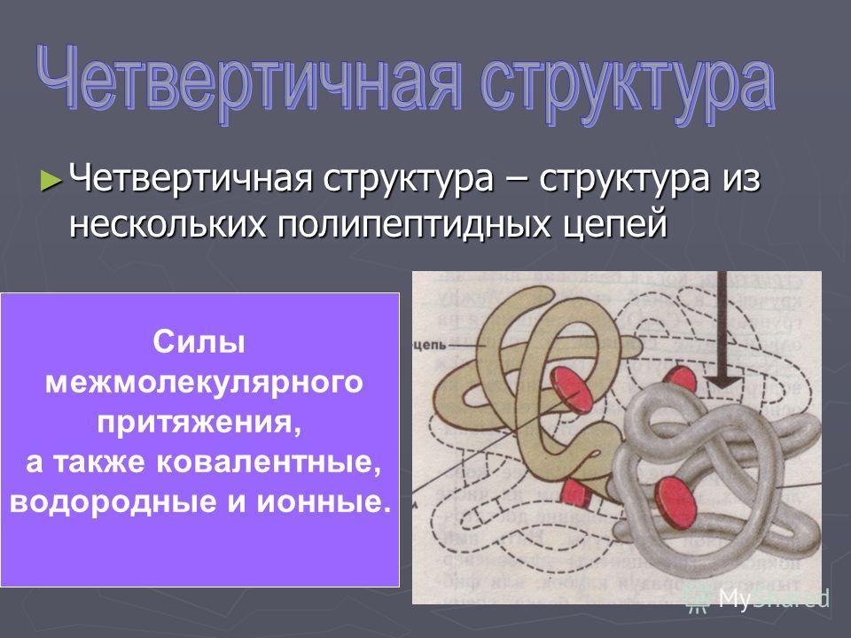 Четвертичная структура – структура из нескольких полипептидных цепей Четвертичная структура – структура из нескольких полипептидных цепей Силы межмолекулярного притяжения, а также ковалентные, водородные и ионные.