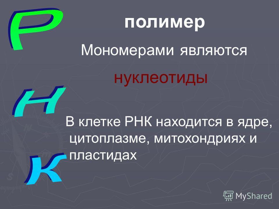 полимер Мономерами являются нуклеотиды В клетке РНК находится в ядре, цитоплазме, митохондриях и пластидах