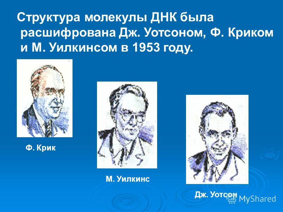 Структура молекулы ДНК была расшифрована Дж. Уотсоном, Ф. Криком и М. Уилкинсом в 1953 году. Ф. Крик М. Уилкинс Дж. Уотсон