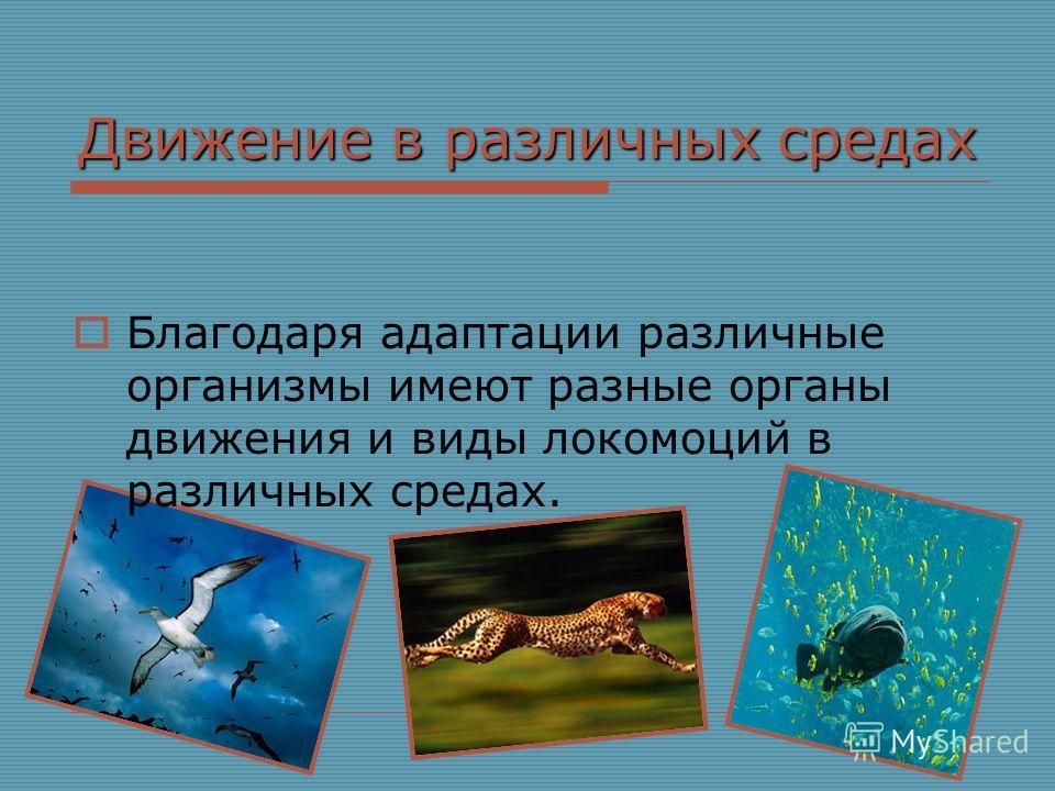 Доклад о движении организмов 6984
