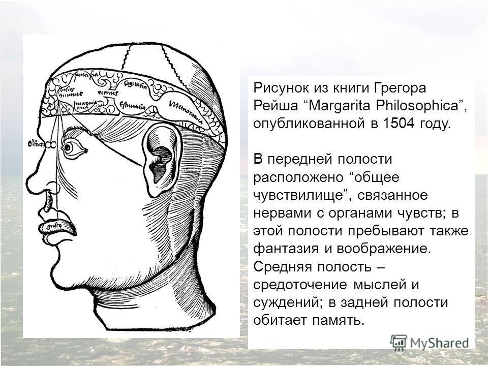 Рисунок из книги Грегора Рейша Margarita Philosophica, опубликованной в 1504 году. В передней полости расположено общее чувствилище, связанное нервами с органами чувств; в этой полости пребывают также фантазия и воображение. Средняя полость – средото