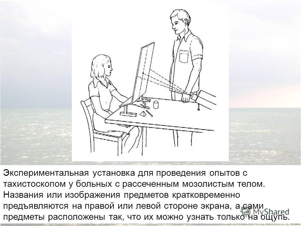 Экспериментальная установка для проведения опытов с тахистоскопом у больных с рассеченным мозолистым телом. Названия или изображения предметов кратковременно предъявляются на правой или левой стороне экрана, а сами предметы расположены так, что их мо