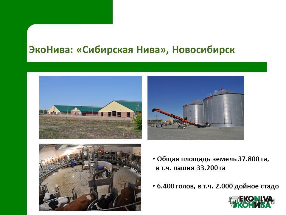 ЭкоНива: «Сибирская Нива», Новосибирск Общая площадь земель 37.800 га, в т.ч. пашня 33.200 га 6.400 голов, в т.ч. 2.000 дойное стадо
