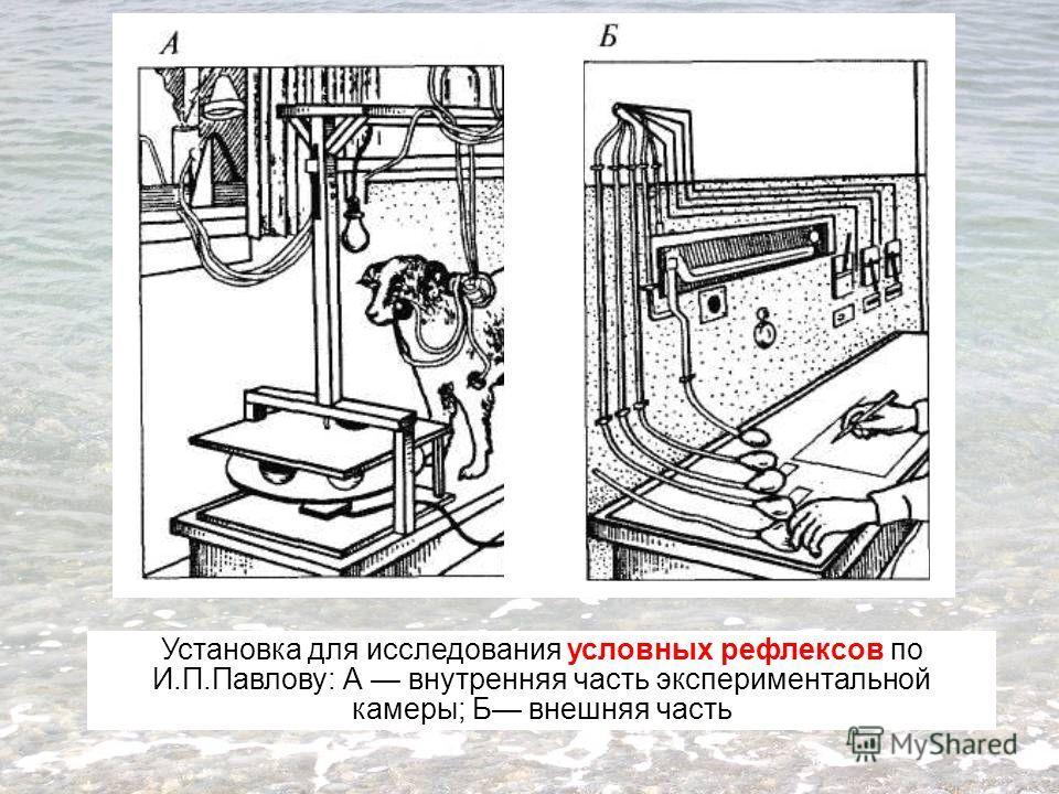 Установка для исследования условных рефлексов по И.П.Павлову: А внутренняя часть экспериментальной камеры; Б внешняя часть